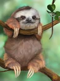 sloth fat and cute